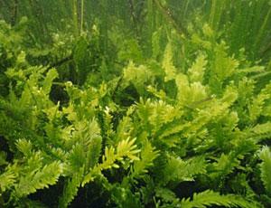 benzina prodotta dalla alghe