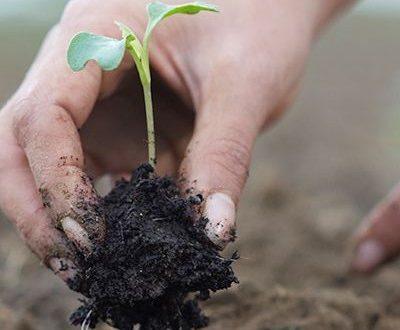Greentire e la diffusione dei temi della sostenibilità