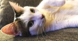 Festa dei gatti Milo
