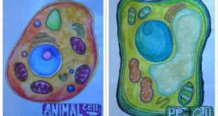 disegno cellule